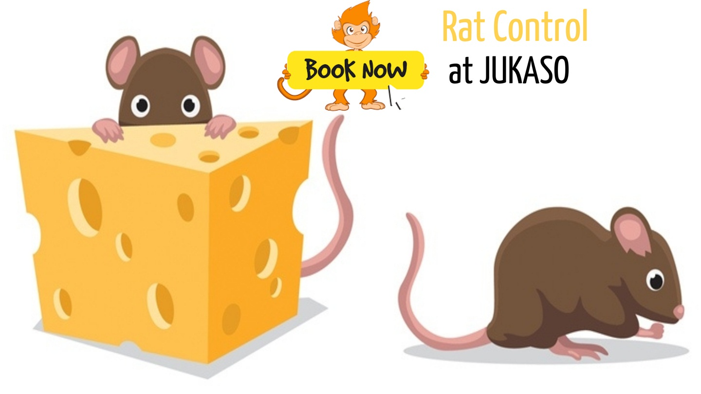 What To Look For in A Commercial Pest Control Company